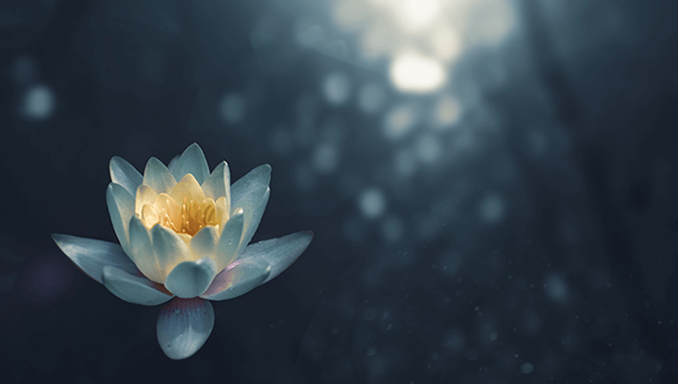 lotus flower in winter water